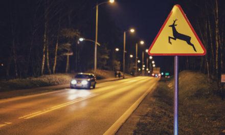 Zwierzaki na drodze – odszkodowanie w przypadku zderzenia