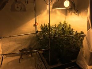 Pruszcz narkotyki (6)