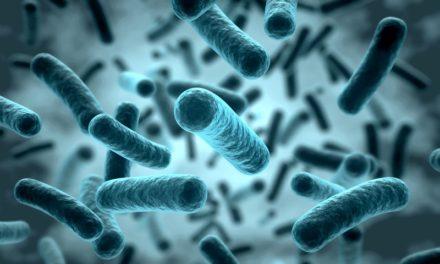 """""""Superbakteria"""" odporna na antybiotyki już na Pomorzu. Pochodzić ma z krajów arabskich"""