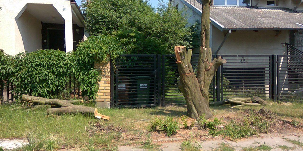 Wycinka drzew na ul. Dąbrowskiego